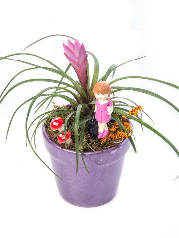 Opal Serisi Tillendsia Tasarım Saksı Çiçekleri çiçek gönder