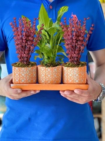 Özel Tasarım 3'lü Bitki Seti Saksı Çiçekleri çiçek gönder