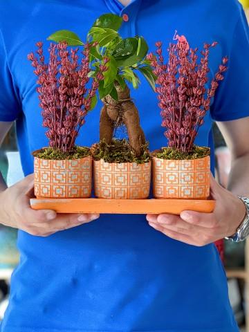 Mis Kokulu Lavanta ve Bonsai Bitkisi Saksı Çiçekleri çiçek gönder