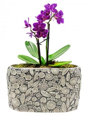 Dekoratif Motif Saksıda Mini Orkide Orkideler çiçek gönder