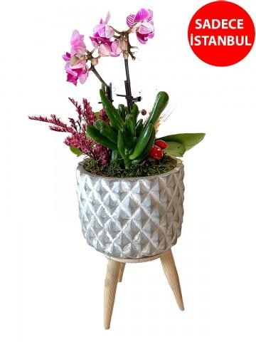 Vintage Vazoda İkili Mor Orkide Orkideler çiçek gönder