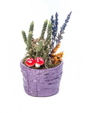 Softy Serisi Kaktüs Tasarım Saksı Çiçekleri çiçek gönder