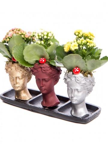 Trio Picta Hero Kalanchoe Tasarım Saksı Çiçekleri çiçek gönder