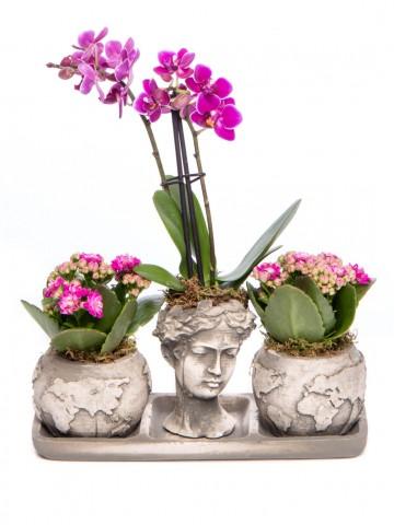 Trio Dünya Serisi Mini Mor Orkide ve Kalanchoe Tasarım Orkideler çiçek gönder