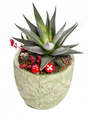 Herba Serisi Howarthia Tasarım Saksı Çiçekleri çiçek gönder