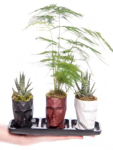 Trio Zeus Serisi Asparagus Tasarım Saksı Çiçekleri çiçek gönder