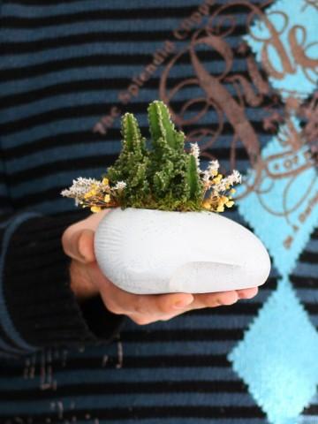 Sleeping Face Sunum Kaktüs  Terarium çiçek gönder