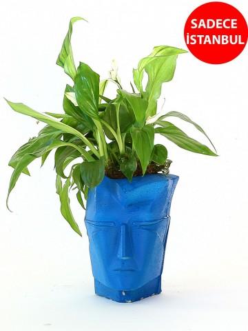 Nefertiti Saksıda Bitki Aranjmanı Saksı Çiçekleri çiçek gönder