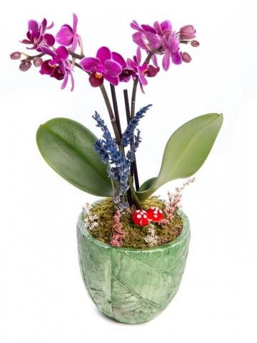 Herba Serisi Mini Mor Orkide Tasarım Orkideler çiçek gönder