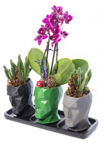 Trio Zeus Serisi Mini Mor Orkide ve Para Çiçeği Tasarım Orkideler çiçek gönder