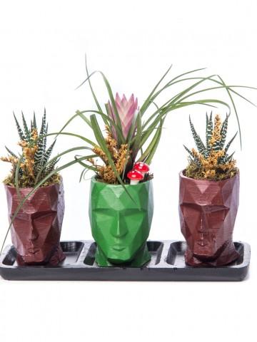 Trio Zeus Serisi Tillendsia Tasarım Saksı Çiçekleri çiçek gönder