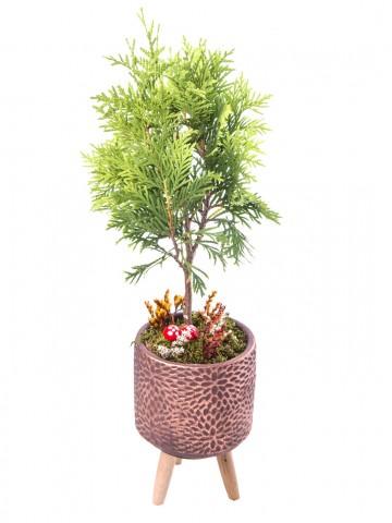 Auctore Serisi Mazı Bonsai Tasarım Saksı Çiçekleri çiçek gönder