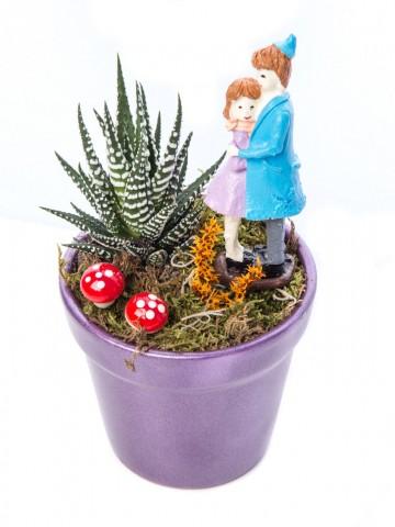 Opal Serisi Howarthia Tasarım Saksı Çiçekleri çiçek gönder