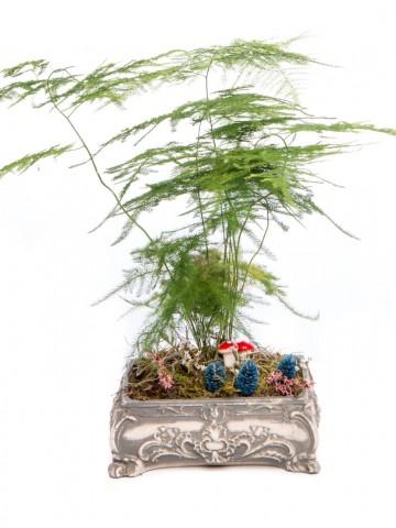 Ahiri Serisi Asparagus Tasarım Saksı Çiçekleri çiçek gönder