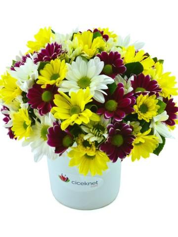 Renk Cümbüşü Papatya Aranjmanı Aranjmanlar çiçek gönder