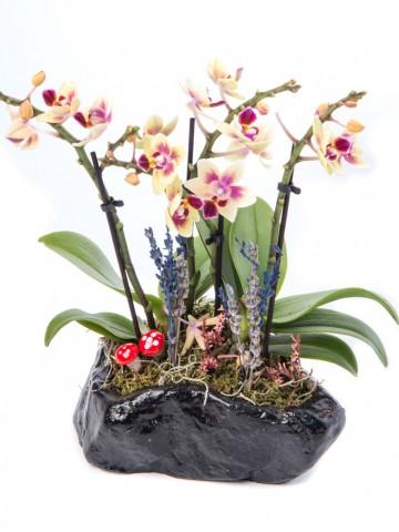 Pettam Serisi Mini Sarı Orkide Tasarım Orkideler çiçek gönder