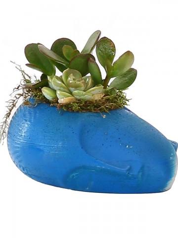 Mavi Sleeping Face Tasarım Teraryum  Terarium çiçek gönder