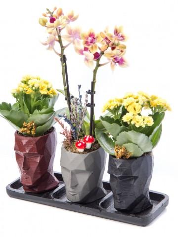Trio Zeus Serisi Mini Sarı Orkide Tasarım Orkideler çiçek gönder