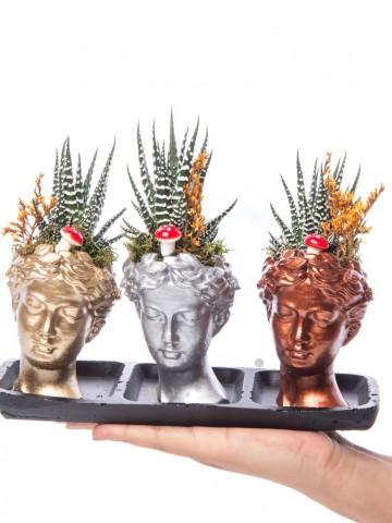 Trio Picta Hero Howarthia Tasarım Saksı Çiçekleri çiçek gönder