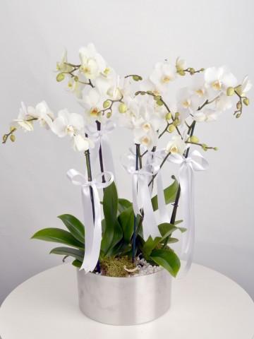 5 Dal Beyaz Orkide  Orkideler çiçek gönder