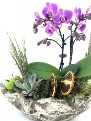 Doğa Harikası Mini Orkide Orkideler çiçek gönder