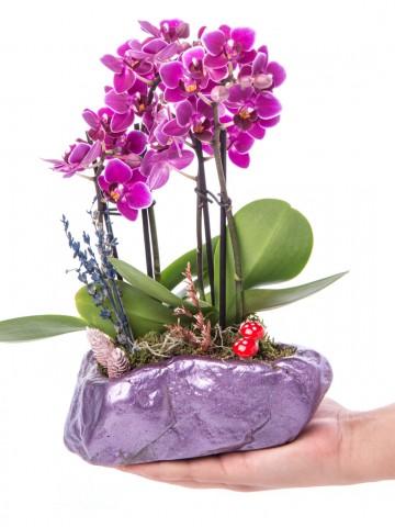 Pettam Serisi Mini Mor Orkide Tasarım Orkideler çiçek gönder