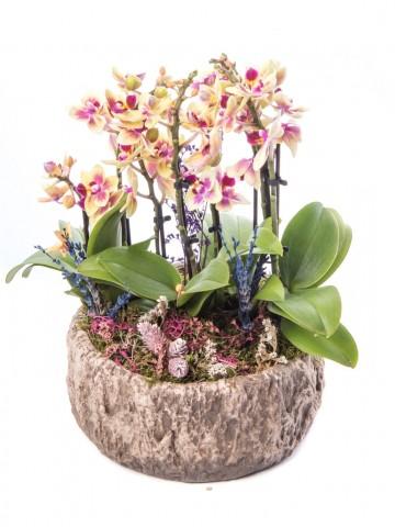 Ratran Serisi Sarı Orkide Tasarım Orkideler çiçek gönder