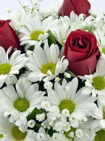 Naifliğin Simgesi Papatya ve Güller Aranjmanlar çiçek gönder