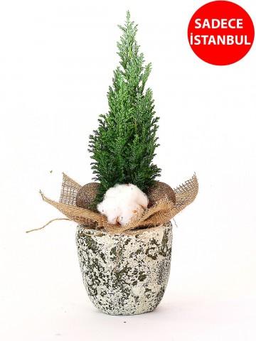 Antik Vazoda Dekoratif Çam Ağacı Saksı Çiçekleri çiçek gönder