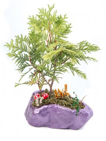 Pettam Serisi Buxus Bonsai Tasarım Saksı Çiçekleri çiçek gönder