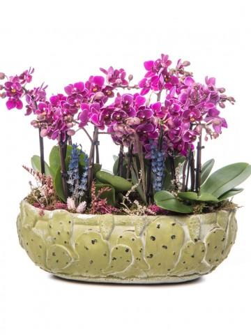 Frank Serisi Mini Mor Orkide Tasarım Orkideler çiçek gönder