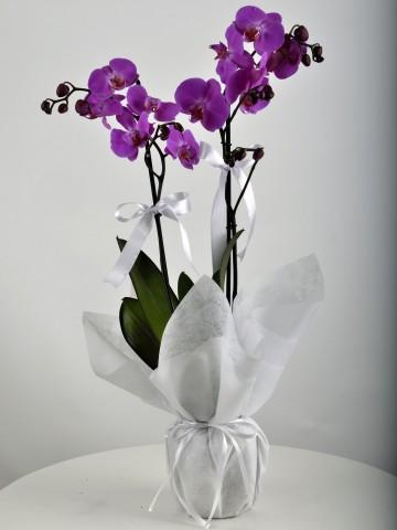 Çift Dallı Mor Orkide Çiçeği Orkideler çiçek gönder