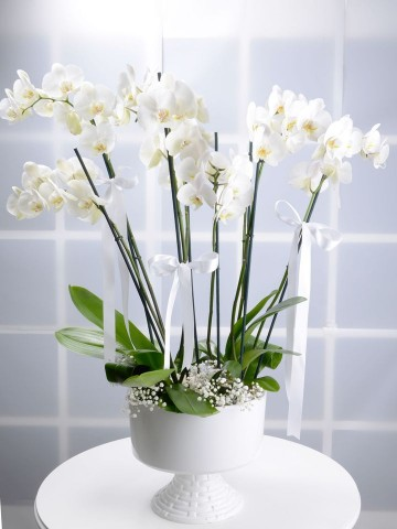 Beyaz Kuğu 8 Dallı Beyaz Orkide Çiçeği Orkideler çiçek gönder