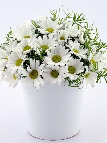 Papatya Prensesi Aranjmanlar çiçek gönder