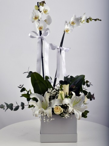 Kare Kutuda Orkide Şöleni Orkideler çiçek gönder