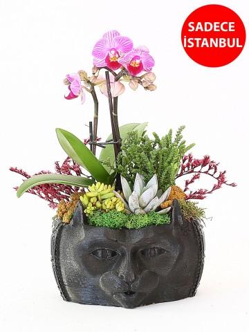 Tasarımlı Saksıda Mini Orkide li  Teraryum Orkideler çiçek gönder