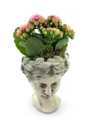Helen de Kalanchoe Bitkisi Saksı Çiçekleri çiçek gönder