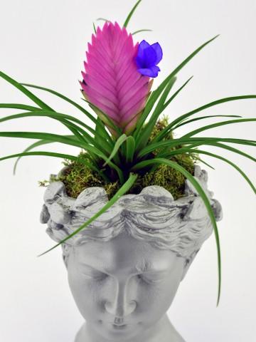 Helen de  Tilandisia Saksı Çiçeği Saksı Çiçekleri çiçek gönder