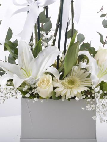 Beyaz orkideli Aranjman Çiçeği Orkideler çiçek gönder