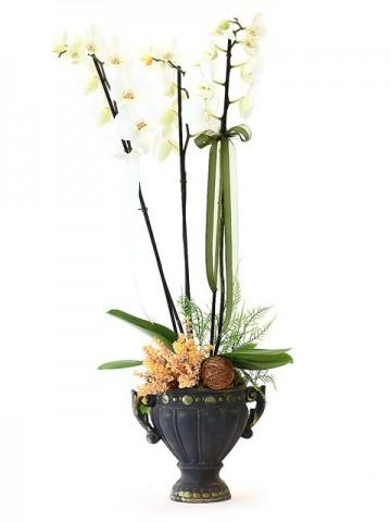 Özel Tasarım Taş Saksıda Beyaz Orkide Orkideler çiçek gönder