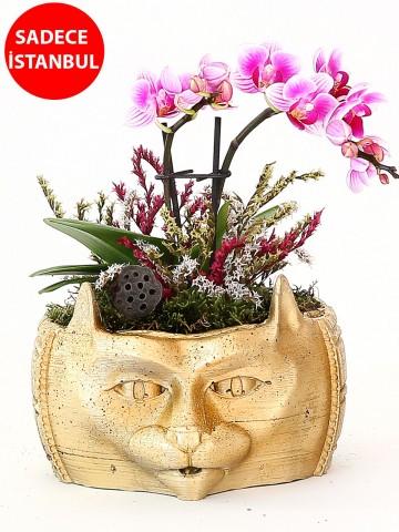 Dekoratif Kedi Tasarımlı Orkide Aranjmanı Orkideler çiçek gönder