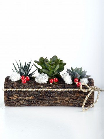 Doğadan Bir Esinti Teraryum Terarium çiçek gönder