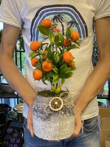 Yapay Mandalina Ağaçı Saksı Çiçekleri çiçek gönder