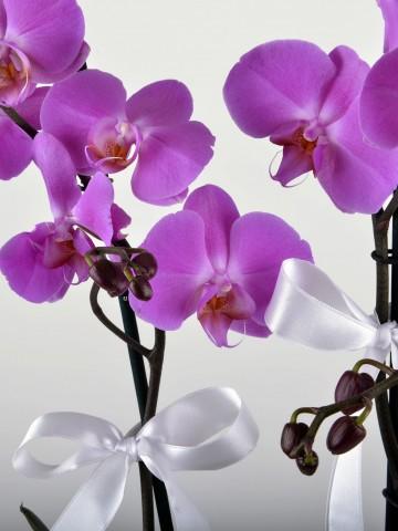 Beyaz Hediyelik Kutuda Orkide Bahçesi Orkideler çiçek gönder