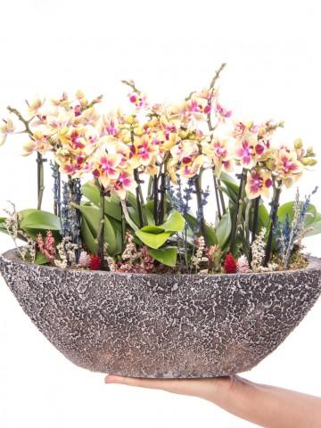 Segreto Serisi Sarı Orkide Mix Tasarım Orkideler çiçek gönder