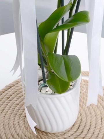 Beyaz 3 Dallı Orkide Çiçeği Orkideler çiçek gönder