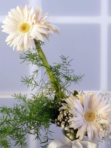 Duygu Seli Aranjmanlar çiçek gönder