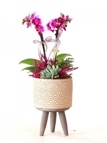 Özel Tasarım Orkide ve Sukulent Aranjmanı Orkideler çiçek gönder