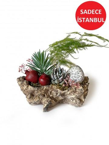 Doğal Seramikte Sukulentler Terarium çiçek gönder