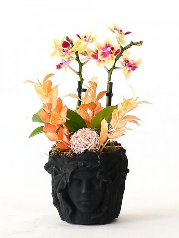 Özel Tasrım Beton Saksıda Mini Orkide Orkideler çiçek gönder